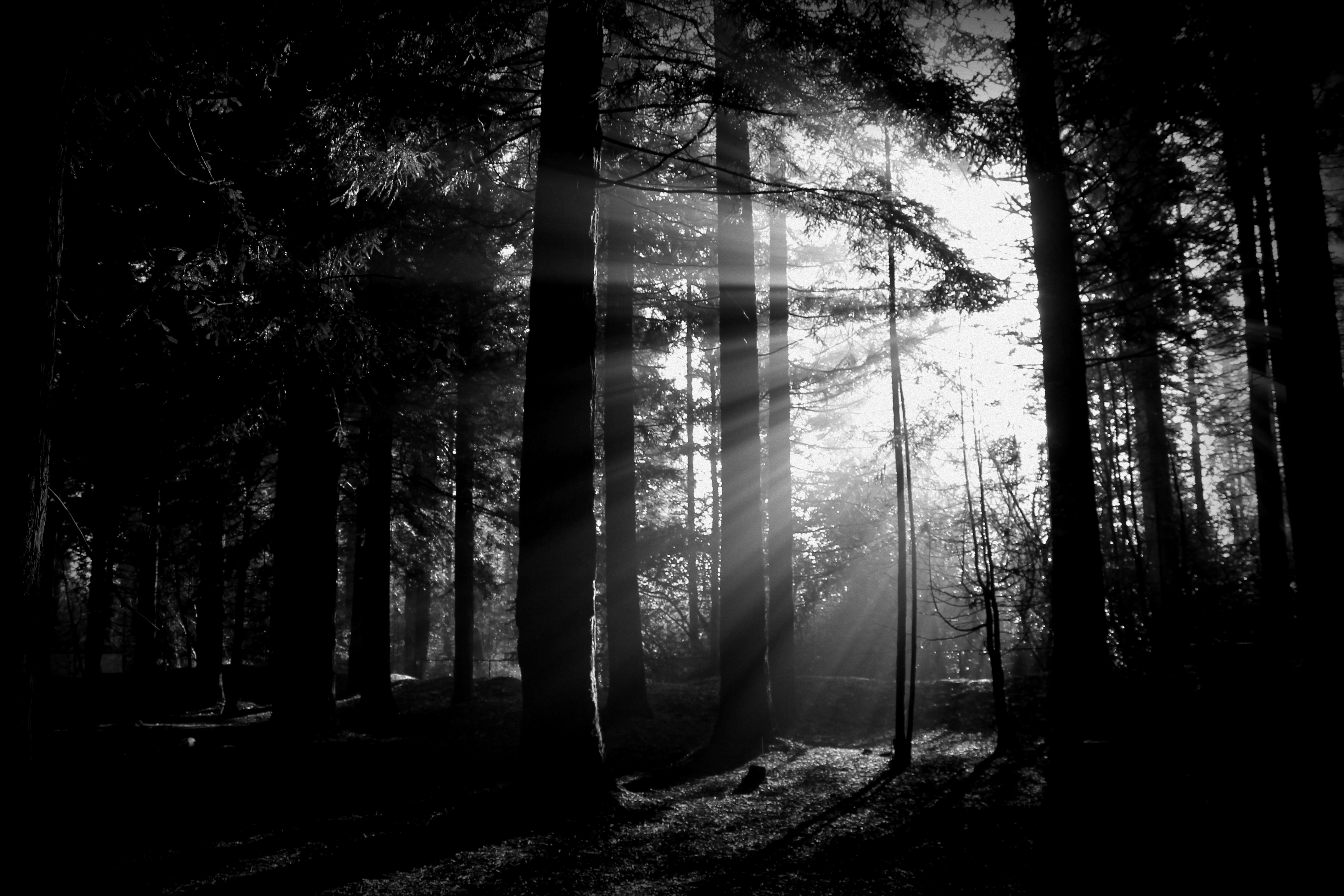 a night in the forest essays Only in the forest do women exercise power how far do you agree with this statement the forest in 'a midsummer night's dream' can be used as a green space, a place where the social norms don't apply.