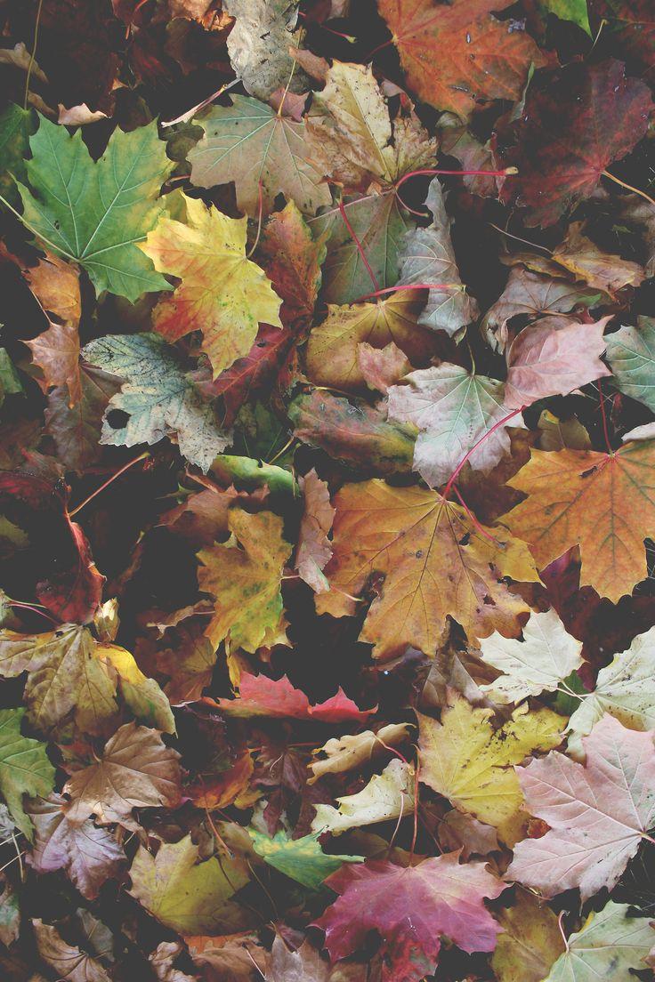 Autumn Lusting