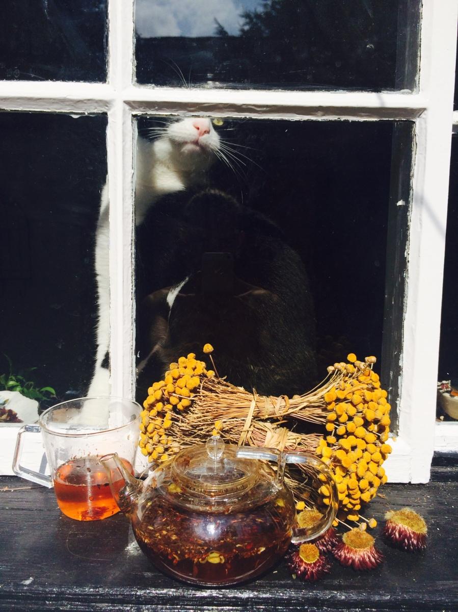 Autumnal Tea Infusion